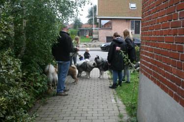 Hvalpedag2012 107